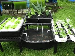 Basic Things You Need to Know About Aquaponics